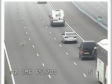 Meerdere overstekende zwanen zorgen voor problemen op snelwegen