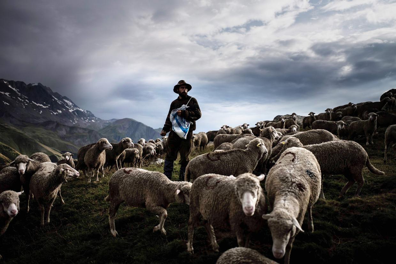 Een herder, 1.300 schapen en drie honden. En af en toe een wolf