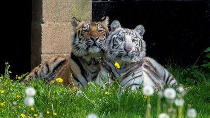 Olmense Zoo wordt morgen feestelijk omgedoopt tot Pakawi Park