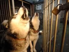 Snelle aanpak blaffende honden in Harderwijks asiel