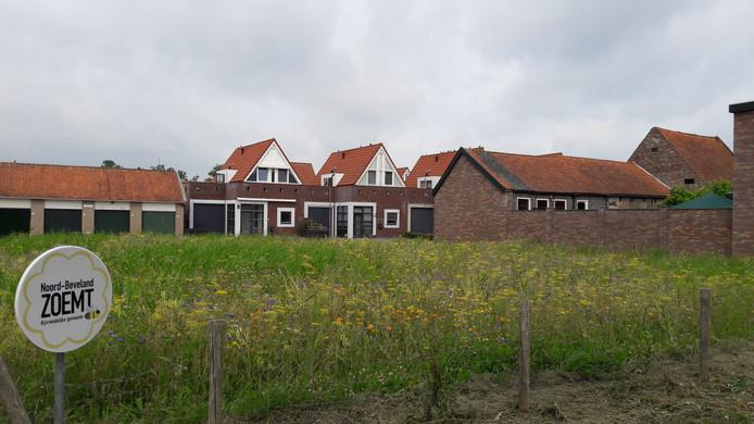 Het terrein op de hoek van de Voorstraat in Wissenkerke was lange tijd gereserveerd voor de Aldi. Momenteel fleuren bloemen de boel een beetje op, maar waarschijnlijk moeten ze over een paar jaar plaatsmaken voor een multifunctioneel centrum.