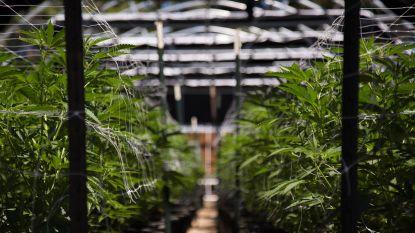 Moeder en zoon zetten villa vol cannabisplanten... om dan met dure luxeproducten te pronken op YouTube