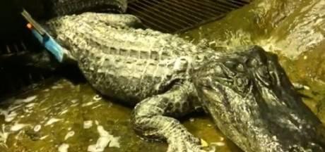 'Hitlers alligator' sterft op zeldzaam hoge leeftijd in dierentuin Moskou