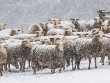 Nagenieten: Zó veranderde de regio Arnhem in een winterwonderland
