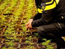 153 hennepplanten gevonden in Huissen