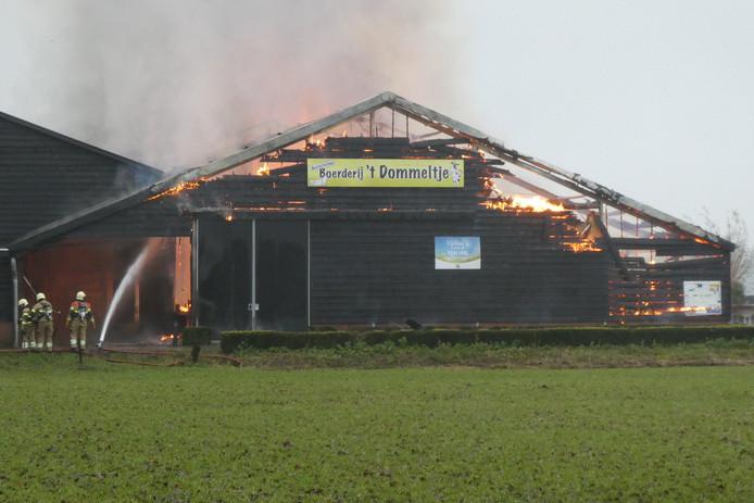 De grote hal naast de koeienstal van 't Dommeltje gaat helemaal in vlammen op.