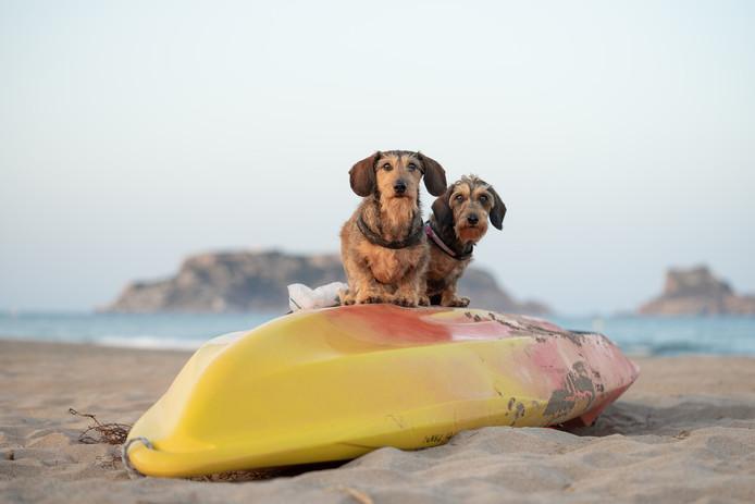 Deze teckels vermaken zich prima op het strand in Spanje.