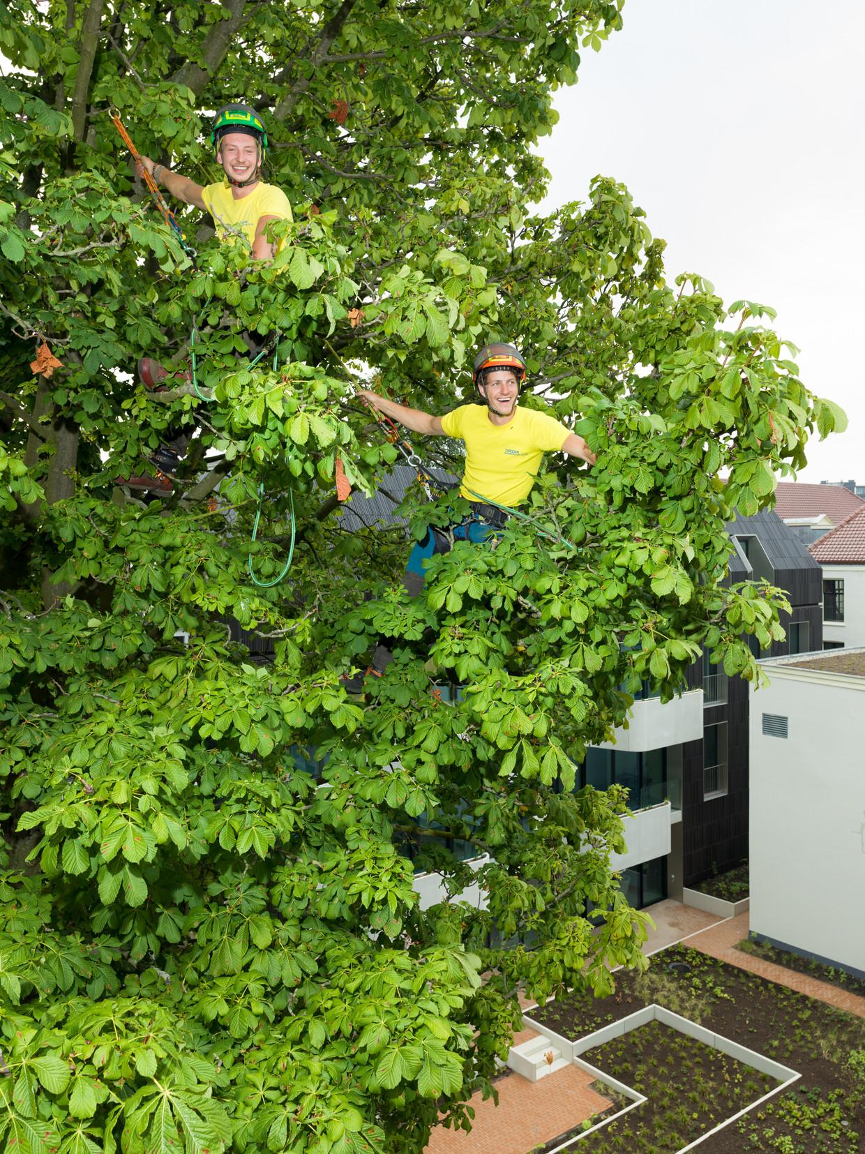 Kaj van Sintemaartensdijk (l) en Christiaan de Jong van Tarzan Boomspecialisten in een tuin op de Prinsengracht. Alles gebeurt uit liefde voor de boom.