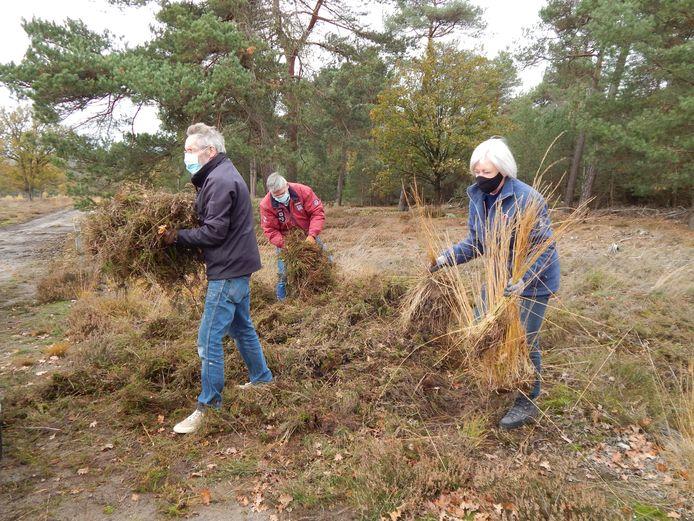 Vrijwilligers verzamelen heidemaaisel voor de kerststal.