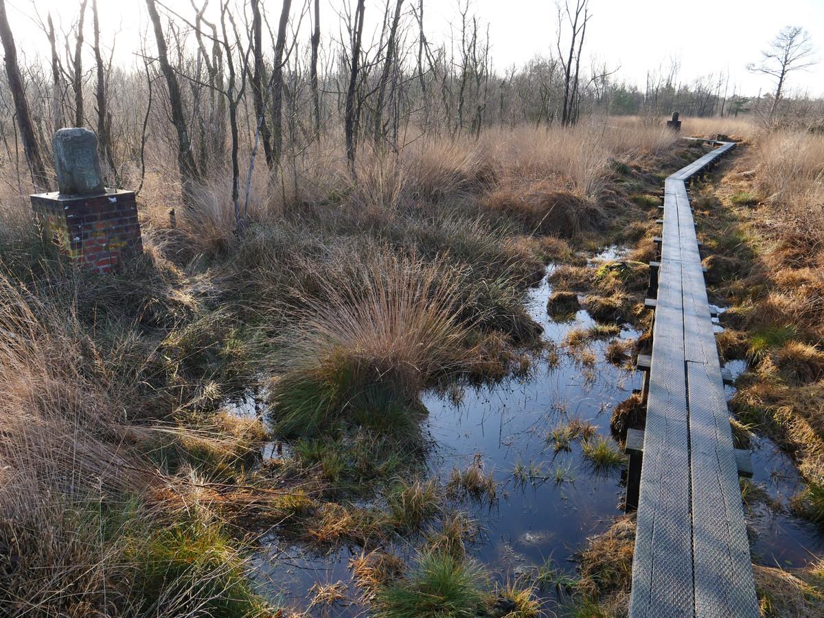 Een houten dam door het Wooldse Veen/Vardingholter Venn bij Winterswijk moet verdroging voorkomen.