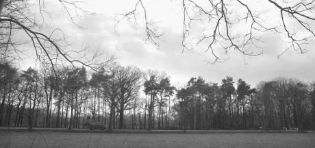 Petitie voor coulissenlandschap: 'Achterhoekse trots dreigt te verdwijnen'