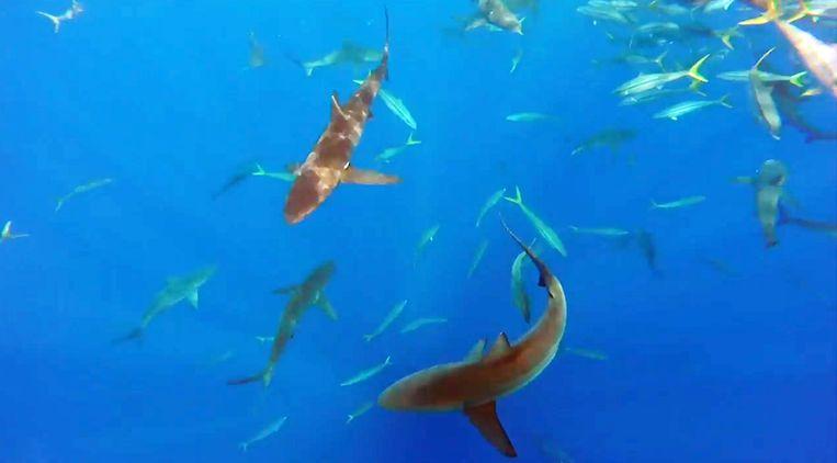 Opeens zwemmen er haaien onder hun rubberen bootje.