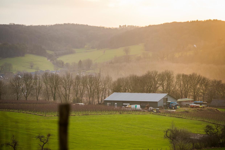 De loods van Stan Beurskens, wijnboer in het Zuid-Limburgse Fromberg, moet binnenkort weg omdat zijn tijdelijke vergunning afloopt.