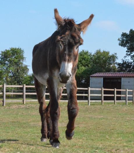 Wat een enorme ezel! (en hij is nog niet uitgegroeid)
