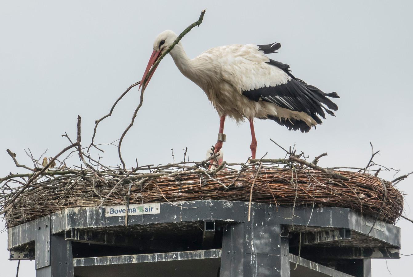 Een ooievaar op het nest.