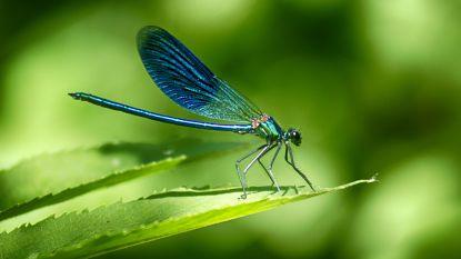 Insectenweek: leg de vliegenmepper maar neer!