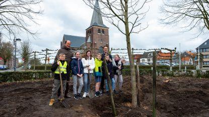 Gooreinds dorpsplein krijgt weer een nieuwe boom