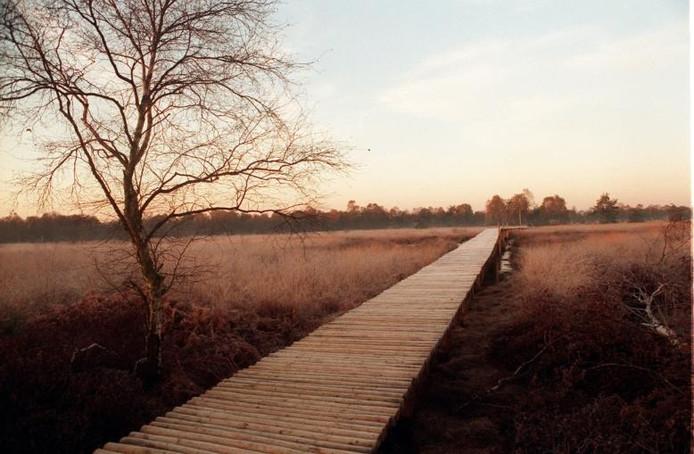 Natuurgebied De Peel. foto Ton van de Meulenhof
