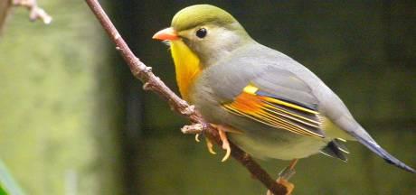 Vogelhandelaar Gijs S. uit Udenhout krijgt taakstraf voor het illegaal invoeren van tropische vogels