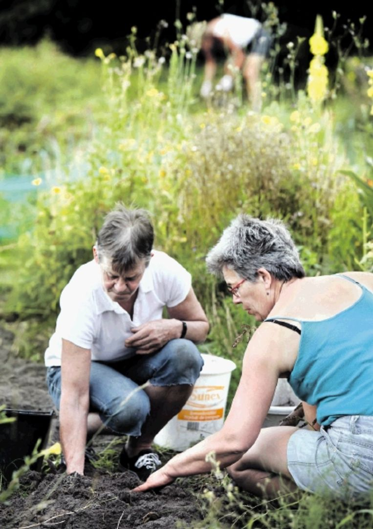 Voor de deelnemers aan tuinweek op landgoed Stoutenburg is het oogsten, wieden en rooien. (Trouw) Beeld