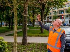 Zomer heeft de bomen in Rotterdam (nog) niet klein gekregen