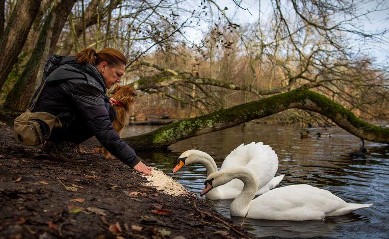 Dorine van der Marel voert de zwanen in het park Meer & Bos in Den Haag waarvoor zij een vuurwerkvrije zone heeft aangevraagd. Beeld Freek van den Bergh / de Volkskrant