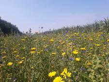 Adopteren bloemenkavels in Soest is groot succes