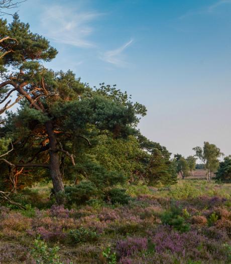 Bosbrigade Nunspeet legt historie Zuiderbos bloot: 'Achter elk stuk bos uniek verhaal'