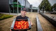 Chilipepers eten tot het (letterlijk) brandt in de keel: 'Chilifest' is écht het pittigste festival van Vlaanderen