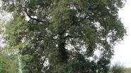 """""""Ik deel mijn bos graag met anderen"""": boseigenaar Raoul D'Hoossche ontvangt wandelaars aan de Schamperij"""