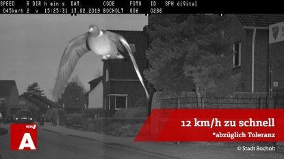 Duif vliegt 12 kilometer te hard en wordt geflitst