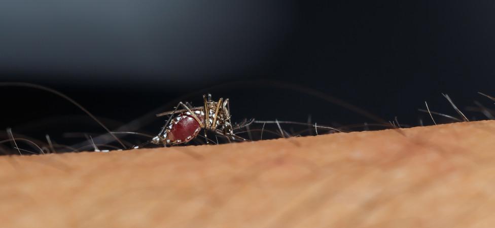 Het insect is een super gevoelig wezen