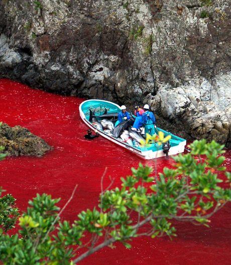 """Caroline Kennedy """"préoccupée"""" par la pêche aux dauphins"""