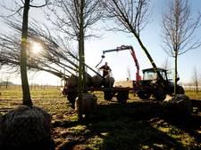 Flink onderhoud aan bomen gemeente Haaren