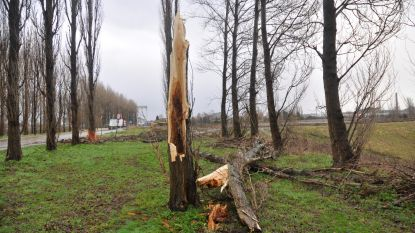 Distributiekabel losgewaaid en boom over straat