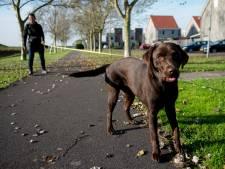 Hellendoorn wil hondentoiletten opheffen