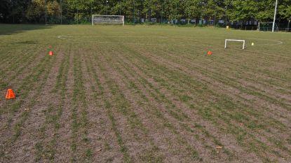 Ingezaaide voetbalterreinen groeien ondanks droogte toch dankzij bemesting