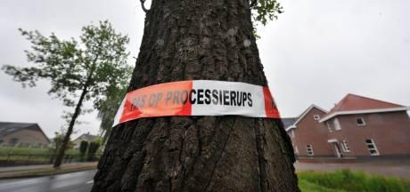 Imkers willen dat Oldebroek het gif Xentari niet gebruikt in strijd tegen eikenprocessierups