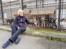 Culemborgse die met honden naar Roemenië wandelde voor goed doel kan niet bij sponsorgeld