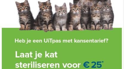 Stad springt kansarme baasjes bij in sterilisatiekost katten