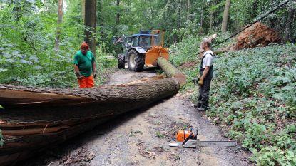 140 omgehakte bomen te koop in het Meerdaalwoud