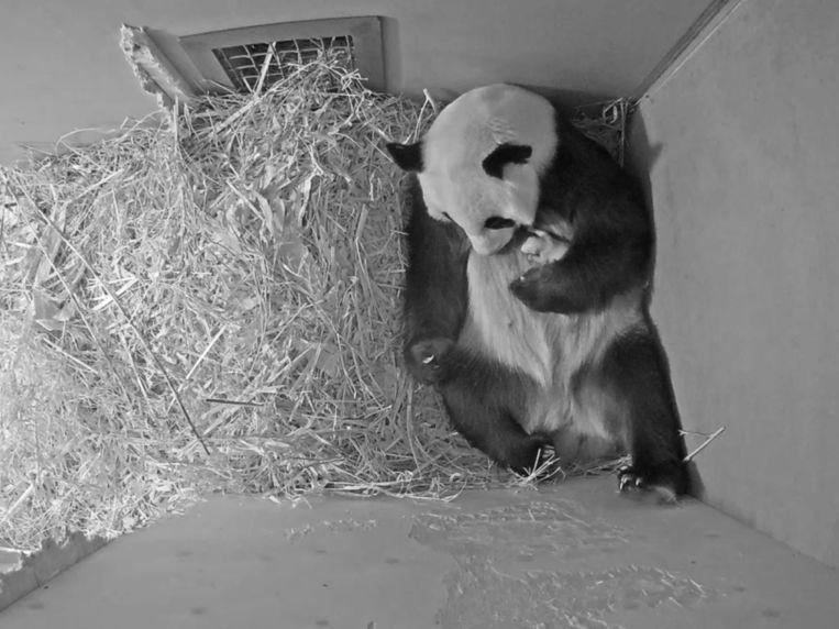 Moeder Wu Wen met pasgeboren baby Fan Xing afgelopen mei.   Beeld AP
