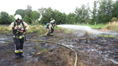 Stuk weide van 1.000 vierkante meter brandt af langs Mosselstraat