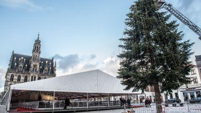 14 meter hoge kerstboom op Markt van Oudenaarde krijgt 1.000 kerstbollen en 20.000 lampjes