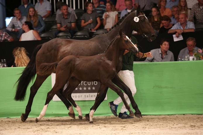 De hengst Marvellous-Linn, van nog geen jaar oud, werd voor 46.000 euro verkocht.