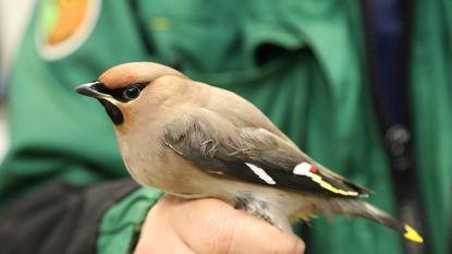 Natuurinspectie neemt illegale vogels in beslag