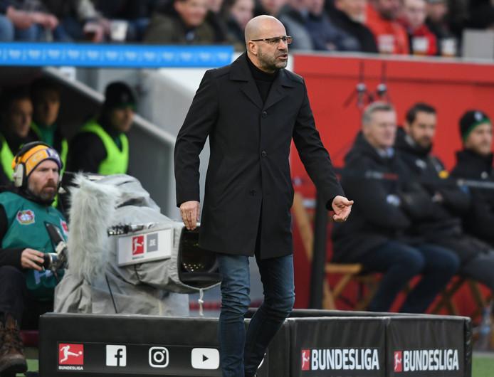 Peter Bosz maakt zich druk langs de lijn in Leverkusen.