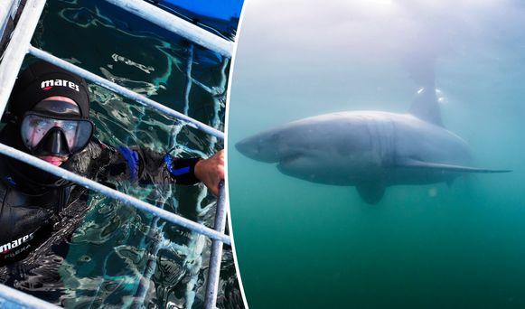 Thomas Van Puymbroeck in de haaienkooi bij Mosselbaai.