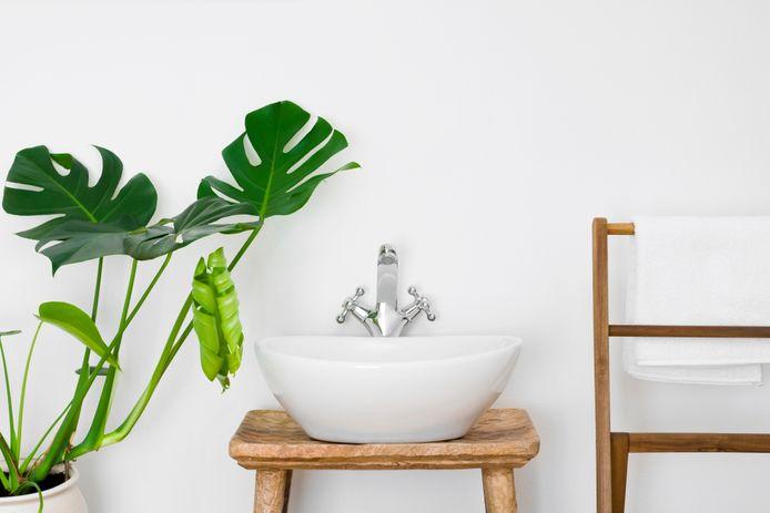 Planten op de badkamer is zo'n gek idee nog niet.
