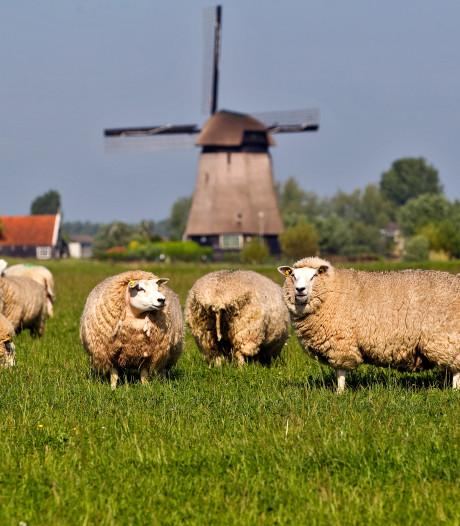 Meer biologische boeren in Zeeland. 'Er is steeds meer vraag naar biologische producten'